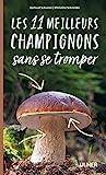 Les 11 meilleurs champignons sans se tromper
